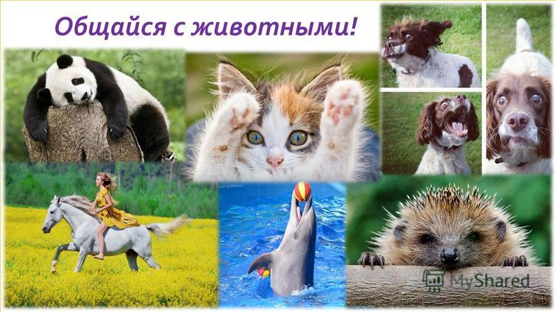 Общайся с животными!