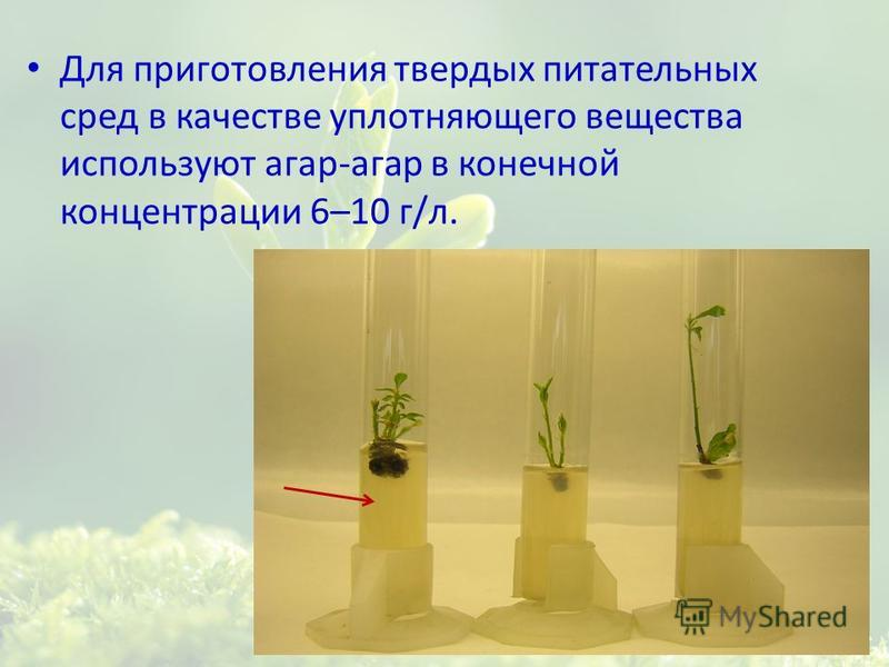 Для приготовления твердых питательных сред в качестве уплотняющего вещества используют агар-агар в конечной концентрации 6–10 г/л.