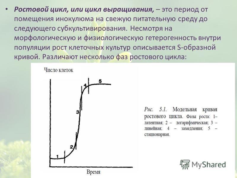 Ростовой цикл, или цикл выращивания, – это период от помещения инокулюма на свежую питательную среду до следующего субкультивирования. Несмотря на морфологическую и физиологическую гетерогенность внутри популяции рост клеточных культур описывается S-