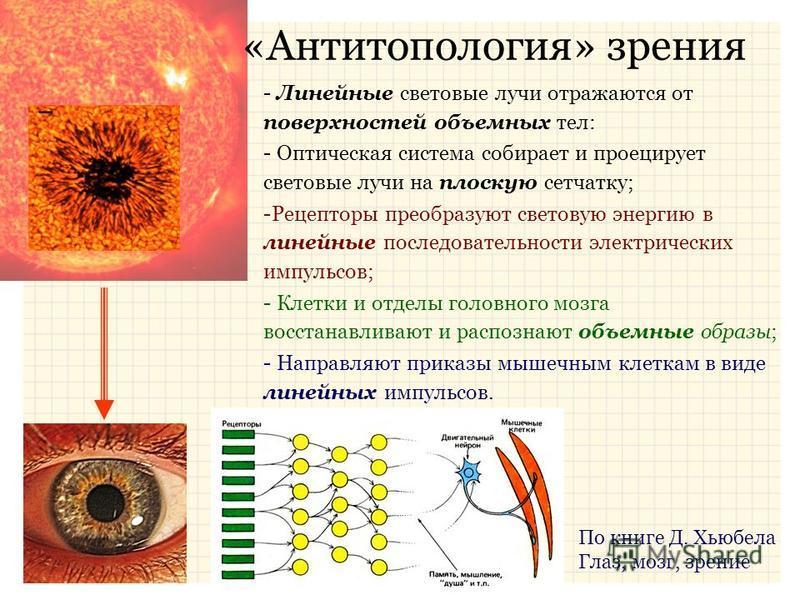«Антитопология» зрения - Линейные световые лучи отражаются от поверхностей объемных тел: - Оптическая система собирает и проецирует световые лучи на плоскую сетчатку; -Рецепторы преобразуют световую энергию в линейные последовательности электрических