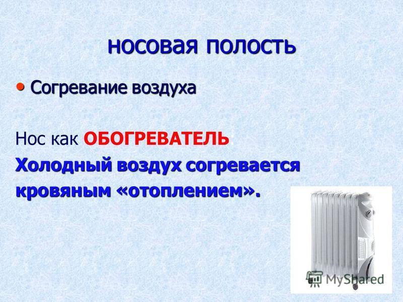 носовая полость Согревание воздуха Согревание воздуха Нос как ОБОГРЕВАТЕЛЬ: Холодный воздух согревается кровяным «отоплением».