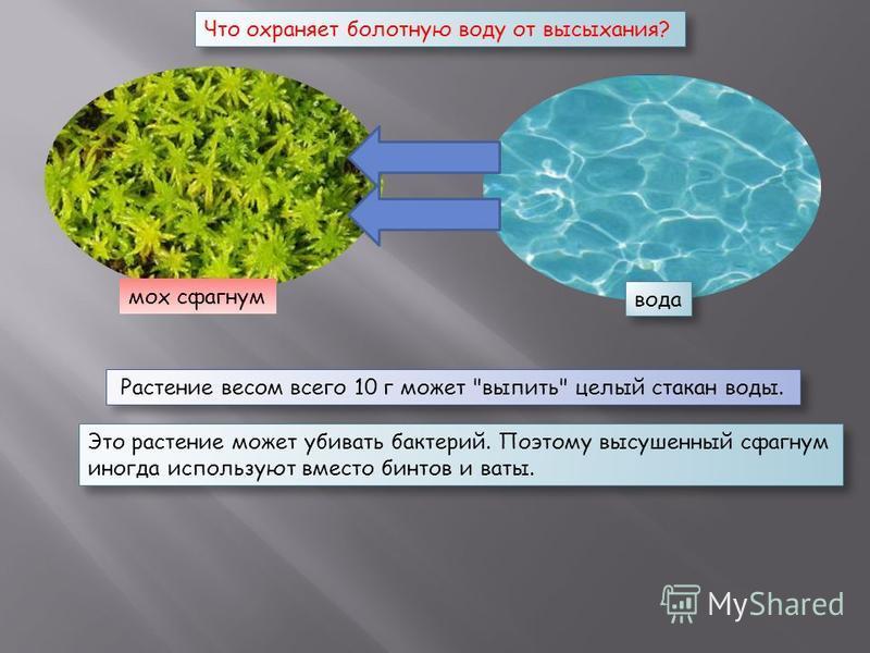 мох сфагнум вода Растение весом всего 10 г может