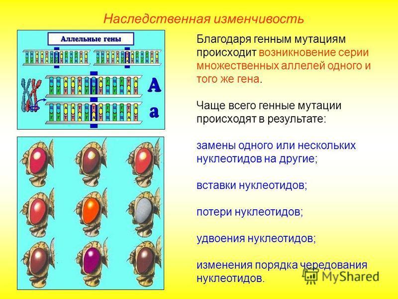 Благодаря генным мутациям происходит возникновение серии множественных аллелей одного и того же гена. Чаще всего генные мутации происходят в результате: замены одного или нескольких нуклеотидов на другие; вставки нуклеотидов; потери нуклеотидов; удво