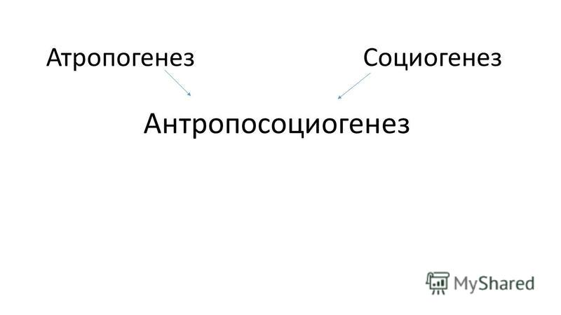 Атропогенез Антропосоциогенез Социогенез