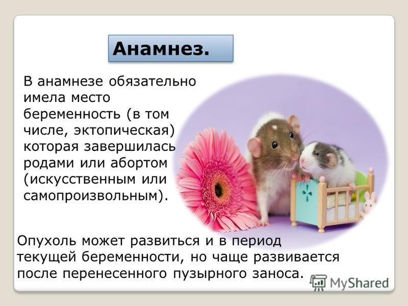 В анамнезе обязательно имела место беременность (в том числе, эктопическая) которая завершилась родами или абортом (искусственным или самопроизвольным). Анамнез. Опухоль может развиться и в период текущей беременности, но чаще развивается после перен
