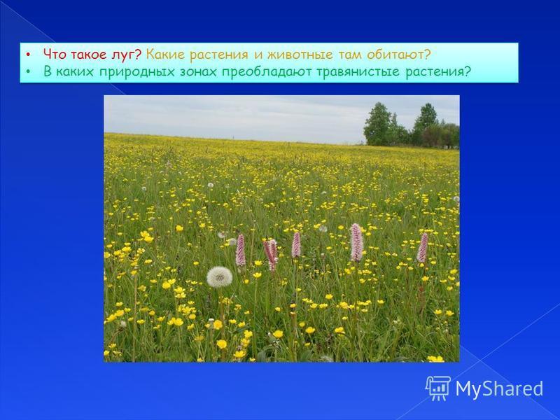 Что такое луг? Какие растения и животные там обитают? В каких природных зонах преобладают травянистые растения? Что такое луг? Какие растения и животные там обитают? В каких природных зонах преобладают травянистые растения?