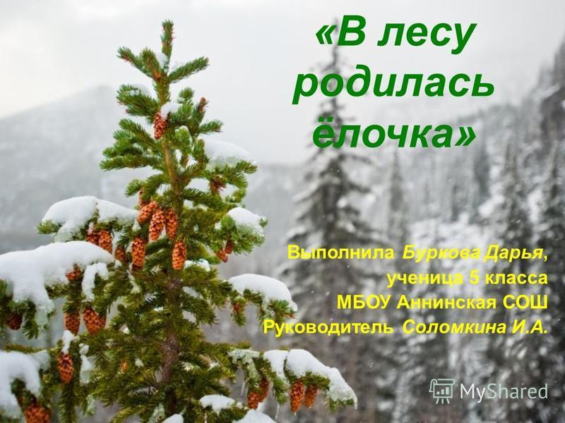 «В лесу родилась ёлочка» Выполнила Буркова Дарья, ученица 5 класса МБОУ Аннинская СОШ Руководитель Соломкина И.А.