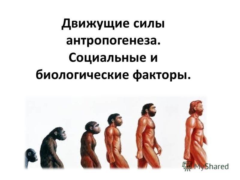 Движущие силы антропогенеза. Социальные и биологические факторы.