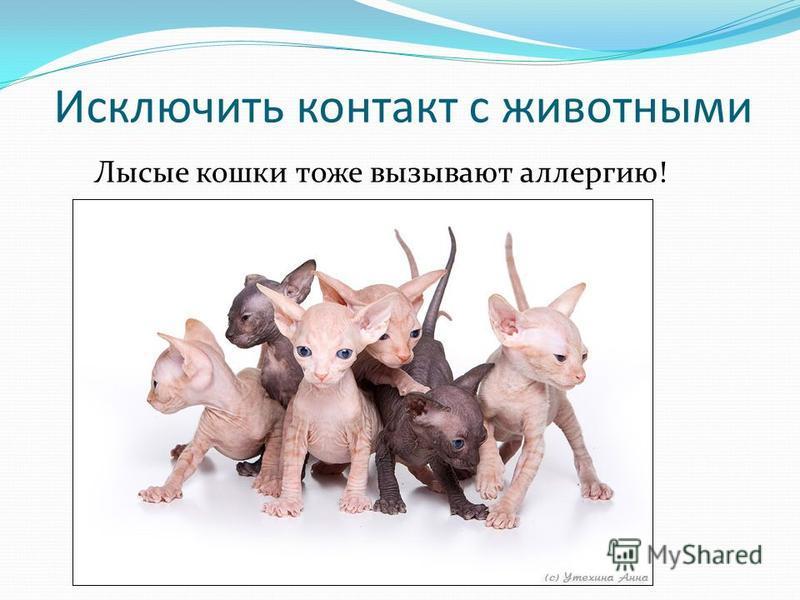 Исключить контакт с животными Лысые кошки тоже вызывают аллергию!