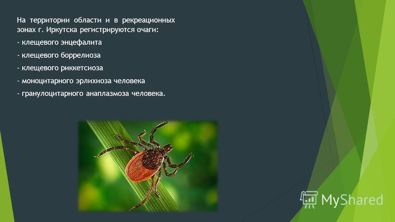 На территории области и в рекреационных зонах г. Иркутска регистрируются очаги: - клещевого энцефалита - клещевого боррелиоза - клещевого риккетсиоза - моноцитарного эрлихиоза человека - гранулоцитарного анаплазмоза человека.