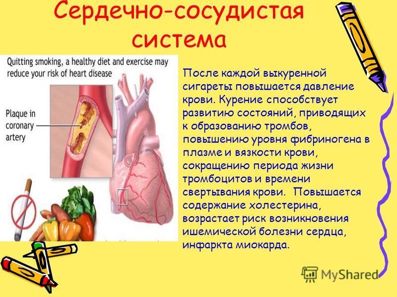 Сердечно-сосудистая система После каждой выкуренной сигареты повышается давление крови. Курение способствует развитию состояний, приводящих к образованию тромбов, повышению уровня фибриногена в плазме и вязкости крови, сокращению периода жизни тромбо