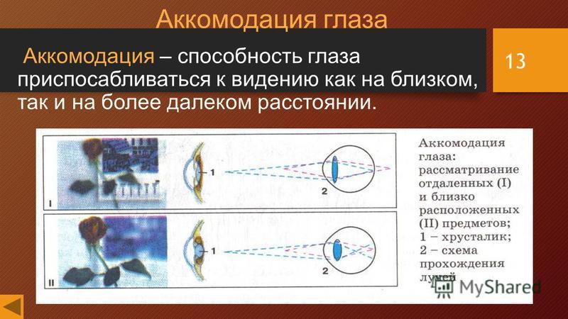 13 Аккомодация глаза Аккомодация – способность глаза приспосабливаться к видению как на близком, так и на более далеком расстоянии.