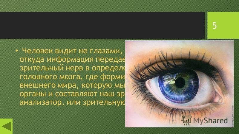 5 Человек видит не глазами, а посредством глаз, откуда информация передается через зрительный нерв в определенные области головного мозга, где формируется та картина внешнего мира, которую мы видим. Все эти органы и составляют наш зрительный анализат