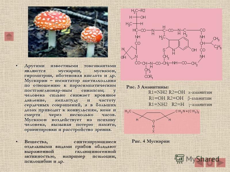 Многие высшие грибы также продуцируют токсические вещества различного строения с широким спектром физиологической активности. Наиболее опасными являются аманитины, аманины и фаллоидины( открыты в 1937 г. немецкими исследователями Ф. Линеном и Г. Вила