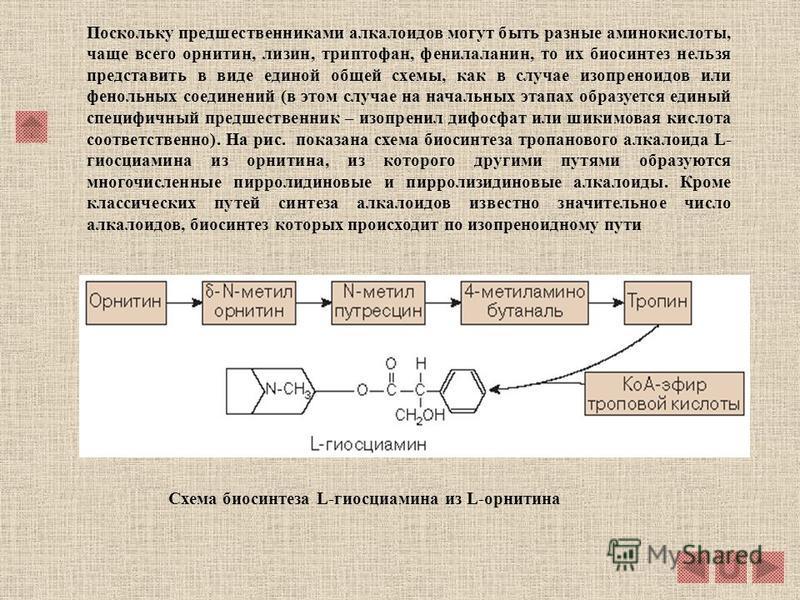 5.2.1.3. Биосинтез алкалоидов. В подавляющем большинстве случаев предшественниками алкалоидов являются различные аминокислоты. Аминокислоты в процессе синтеза алкалоидов подвергаются разнообразным ферментативным преобразованиям: их молекулы могут оки