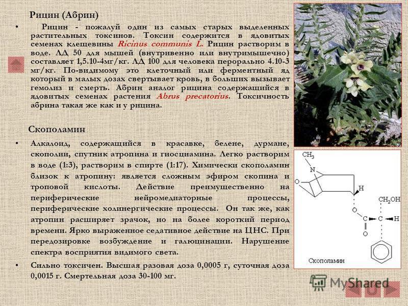 Никотин (3-метилпироллидин-2 –пиридин) Этот жидкий алкалоид в чистом виде выделен в 1828 Поссельтом и Рейманом. Никотин вырабатывается корнями табачного растения Nicotiana tabacum и оттуда поступает в другие части растения. Содержание никотина в раст