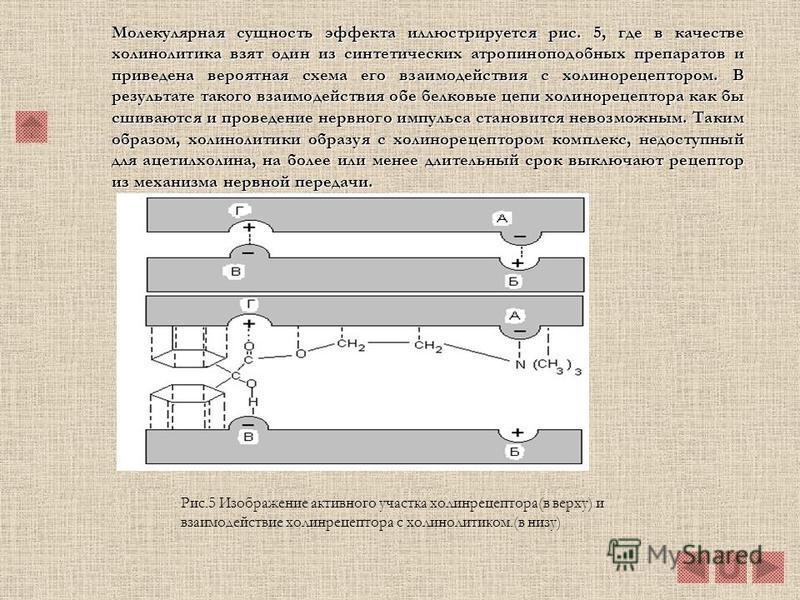 6.2. Механизм действия атропина и атропиноподобных веществ. Особенностью атропина является его способность блокировать м- холинорецепторы; он действует также (хотя значительно слабее) на н- холинорецепторы.Особенностью атропина является его способнос