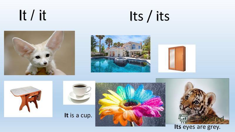 Ii It / it Ii Its / its It is a cup. Its eyes are grey.