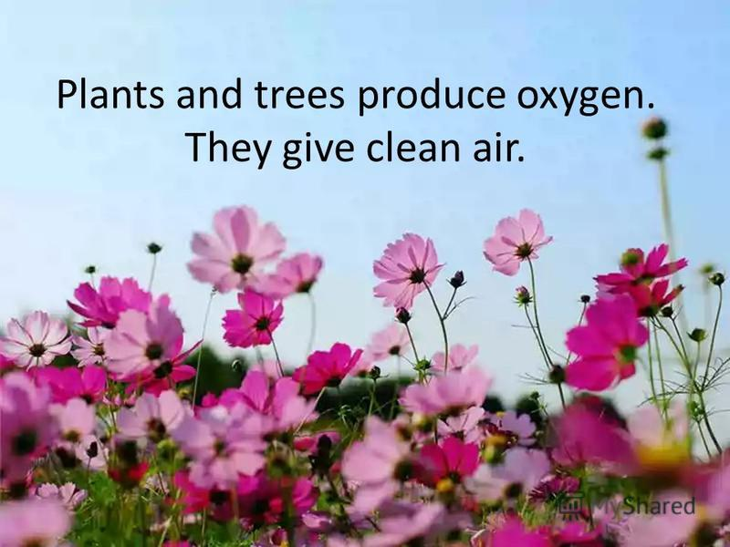 Plants and trees produce oxygen. They give clean air.