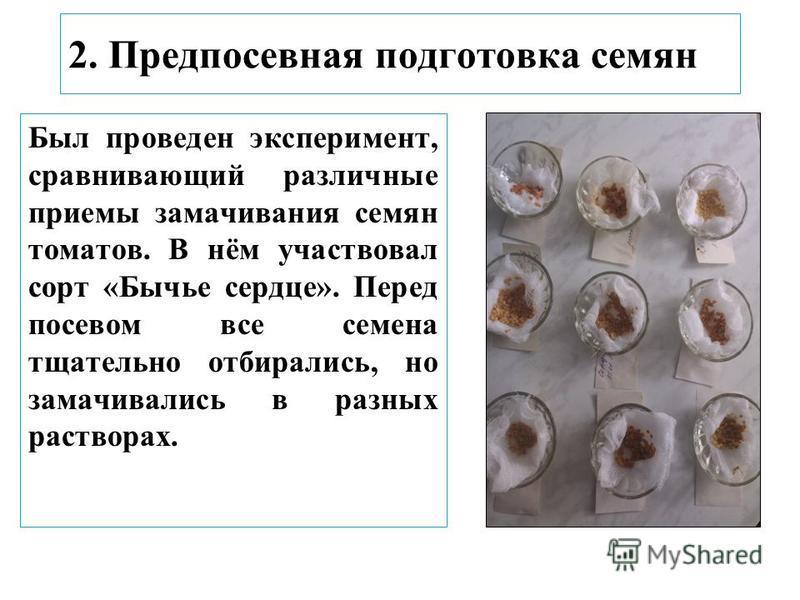 2. Предпосевная подготовка семян Был проведен эксперимент, сравнивающий различные приемы замачивания семян томатов. В нём участвовал сорт «Бычье сердце». Перед посевом все семена тщательно отбирались, но замачивались в разных растворах.