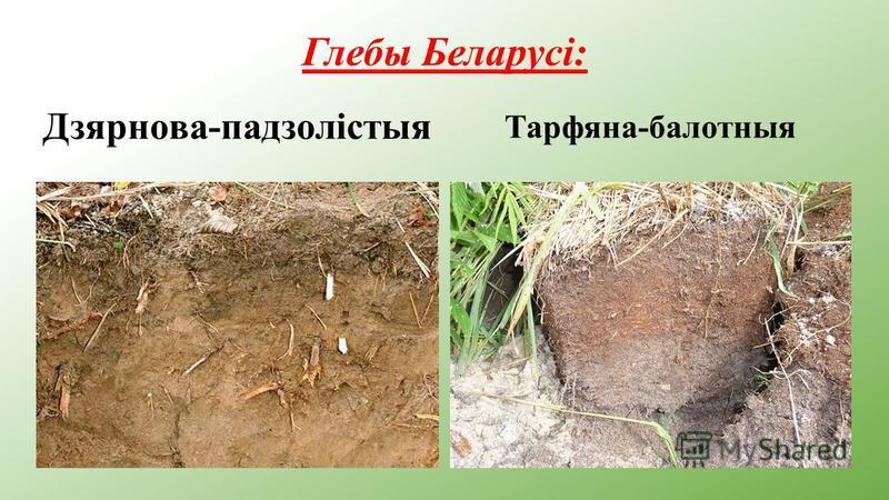Глебы Беларусі: Дзярнова-падзолістыя Тарфяна-балотныя