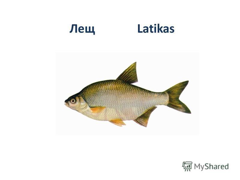 Лещ Latikas