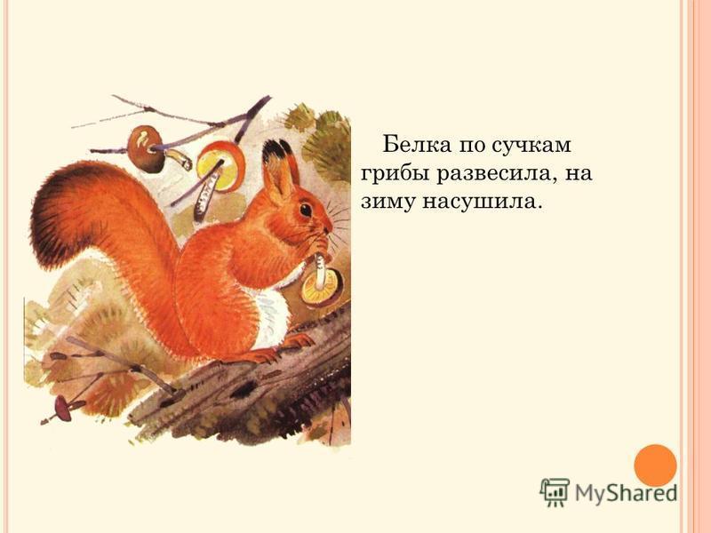 Белка по сучкам грибы развесила, на зиму насушила.