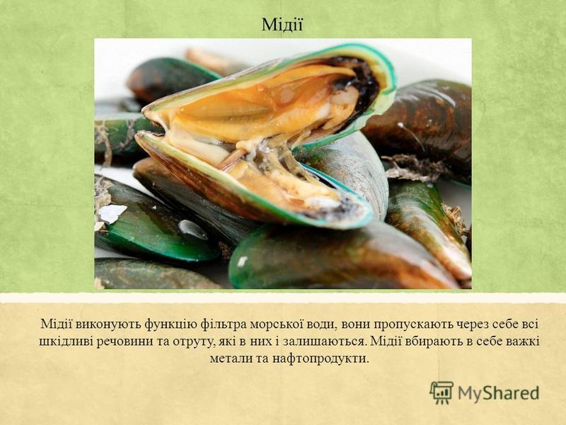 Мідії Мідії виконують функцію фільтра морської води, вони пропускають через себе всі шкідливі речовини та отруту, які в них і залишаються. Мідії вбирають в себе важкі метали та нафтопродукти.