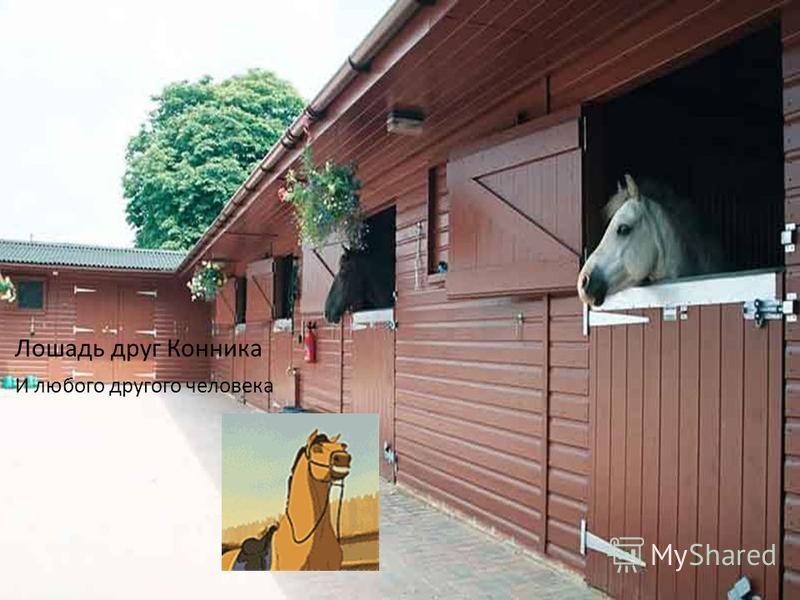 Лошадь друг Конника И любого другого человека