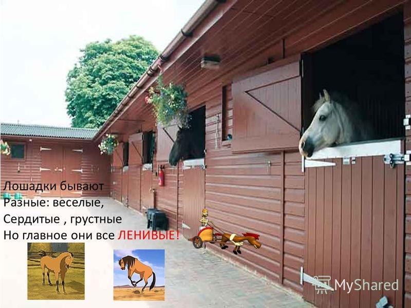 Лошадки бывают Разные: веселые, Сердитые, грустные Но главное они все ЛЕНИВЫЕ!