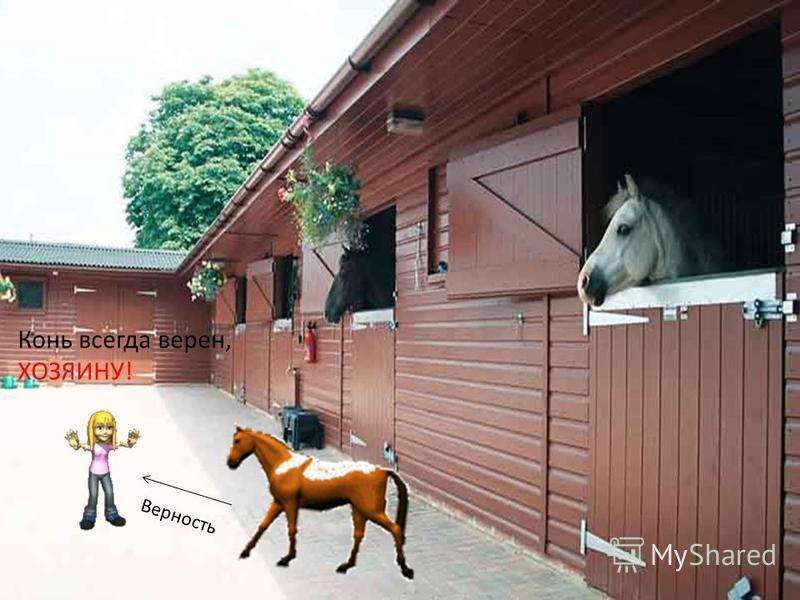 Конь всегда верен, ХОЗЯИНУ! Верность
