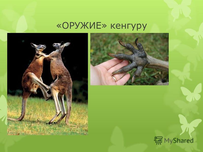«ОРУЖИЕ» кенгуру