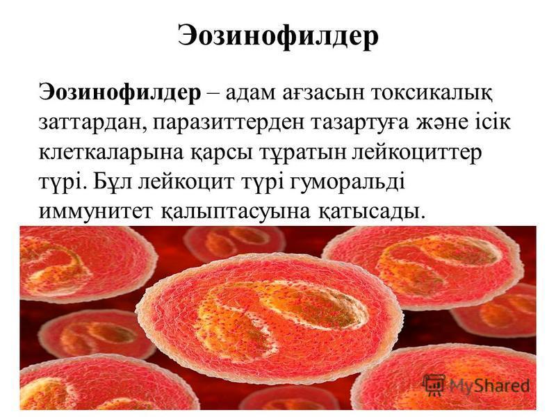 Эозинофилдер Эозинофилдер – адам ағзасын токсикалық заттардан, паразиттерден тазартуға және ісік клеткаларына қарсы тұратын лейкоциттер түрі. Бұл лейкоцит түрі гуморальді иммунитет қалыптасуына қатысады.
