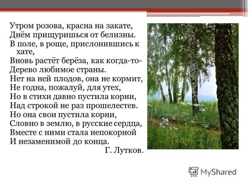 Утром розова, красна на закате, Днём прищуришься от белизны. В поле, в роще, прислонившись к хате, Вновь растёт берёза, как когда-то- Дерево любимое страны. Нет на ней плодов, она не кормит, Не годна, пожалуй, для утех, Но в стихи давно пустила корни