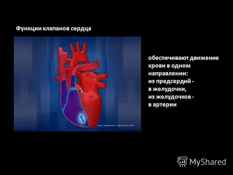 обеспечивают движение крови в одном направлении: из предсердий - в желудочки, из желудочков - в артерии Функции клапанов сердца