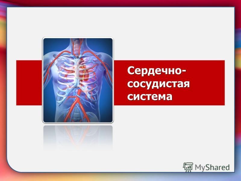 Сердечно- сосудистая система