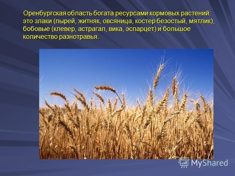 Оренбургская область богата ресурсами кормовых растений: это злаки (пырей, житняк, овсяница, костер безостый, мятлик), бобовые (клевер, астрагал, вика, эспарцет) и большое количество разнотравья. Оренбургская область богата ресурсами кормовых растени