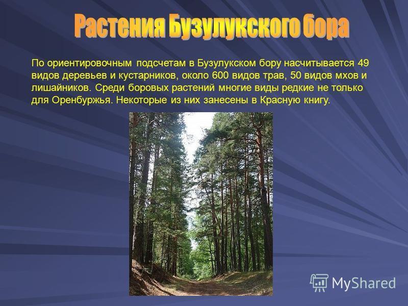 По ориентировочным подсчетам в Бузулукском бору насчитывается 49 видов деревьев и кустарников, около 600 видов трав, 50 видов мхов и лишайников. Среди боровых растений многие виды редкие не только для Оренбуржья. Некоторые из них занесены в Красную к