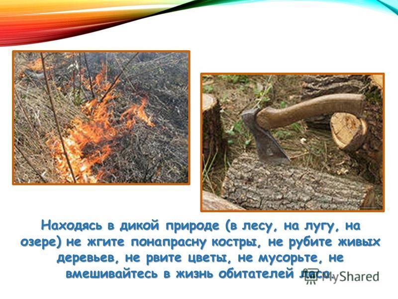 Находясь в дикой природе (в лесу, на лугу, на озере) не жгите понапрасну костры, не рубите живых деревьев, не рвите цветы, не мусорьте, не вмешивайтесь в жизнь обитателей леса.