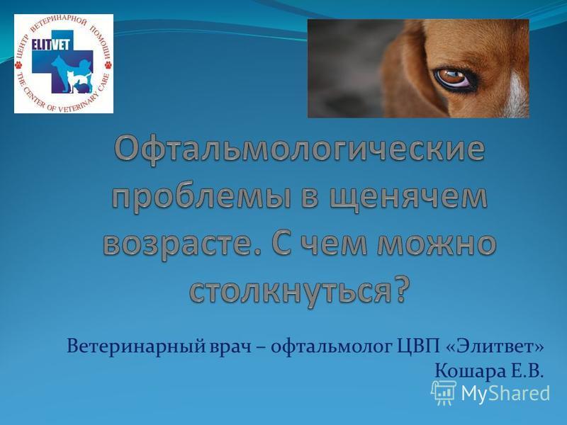 Ветеринарный врач – офтальмолог ЦВП «Элитвет» Кошара Е.В.