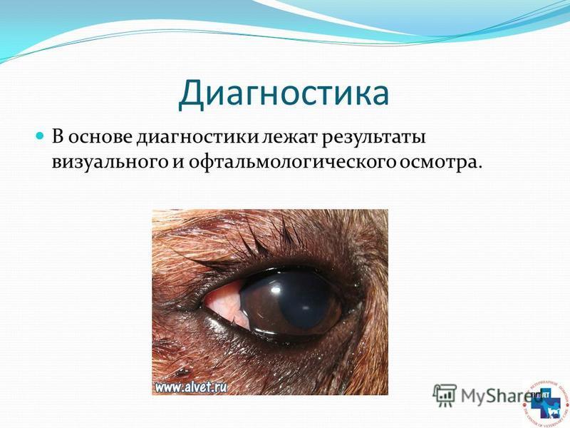 Диагностика В основе диагностики лежат результаты визуального и офтальмологического осмотра.