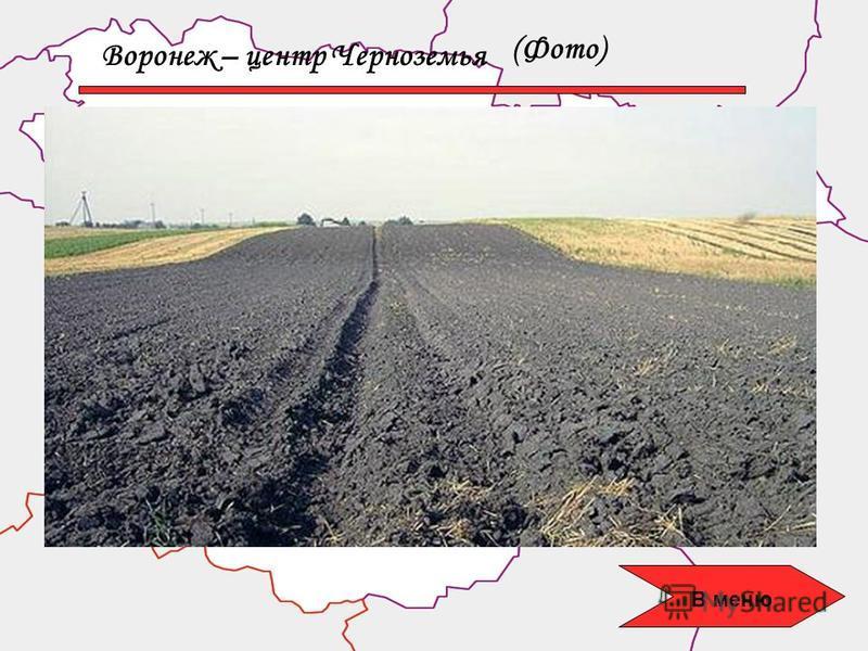 Воронеж – центр Черноземья (Фото) В меню