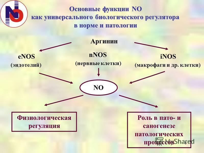 6 Основные функции NO как универсального биологического регулятора в норме и патологии Аргинин eNOS (эндотелий) nNOS (нервные клетки) iNOS (макрофаги и др. клетки) NO Физиологическая регуляция Роль в пато- и саногенезе патологических процессов