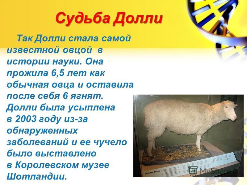 Судьба Долли Так Долли стала самой известной овцой в истории науки. Она прожила 6,5 лет как обычная овца и оставила после себя 6 ягнят. Долли была усыплена в 2003 году из-за обнаруженных заболеваний и ее чучело было выставлено в Королевском музее Шот