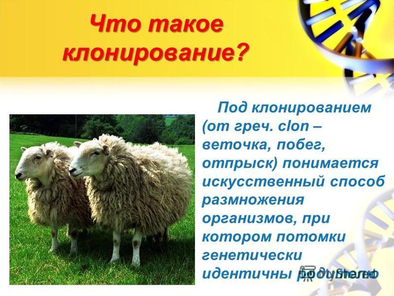 Что такое клонирование? Под клонированием (от греч. clon – веточка, побег, отпрыск) понимается искусственный способ размножения организмов, при котором потомки генетически идентичны родителю