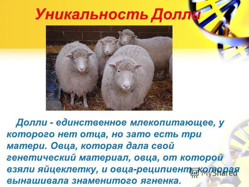 Уникальность Долли Долли - единственное млекопитающее, у которого нет отца, но зато есть три матери. Овца, которая дала свой генетический материал, овца, от которой взяли яйцеклетку, и овца-реципиент, которая вынашивала знаменитого ягненка.