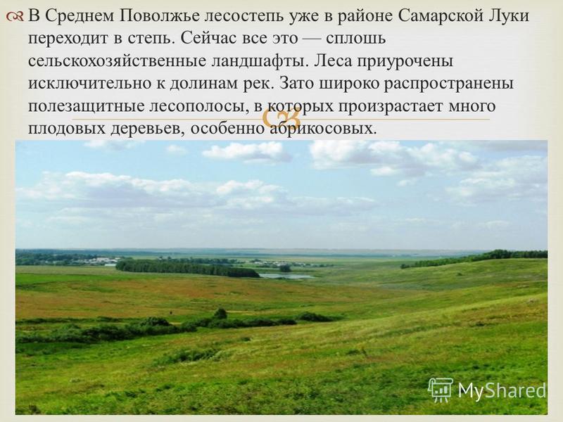 В Среднем Поволжье лесостепь уже в районе Самарской Луки переходит в степь. Сейчас все это сплошь сельскохозяйственные ландшафты. Леса приурочены исключительно к долинам рек. Зато широко распространены полезащитные лесополосы, в которых произрастает