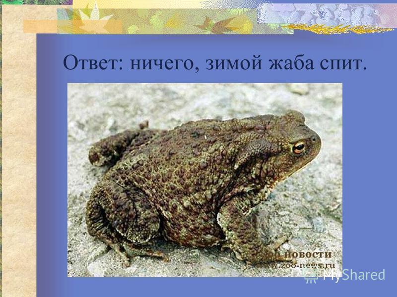 Ответ: ничего, зимой жаба спит.
