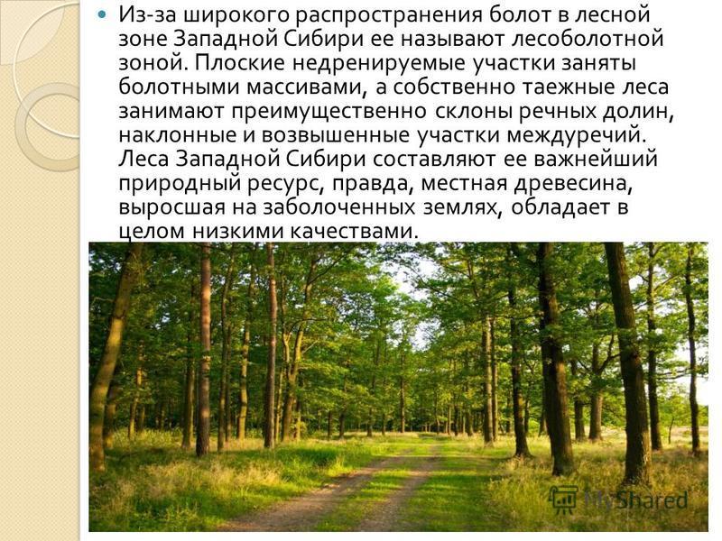 Из - за широкого распространения болот в лесной зоне Западной Сибири ее называют лесоболотной зоной. Плоские недренируемые участки заняты болотными массивами, а собственно таежные леса занимают преимущественно склоны речных долин, наклонные и возвыше