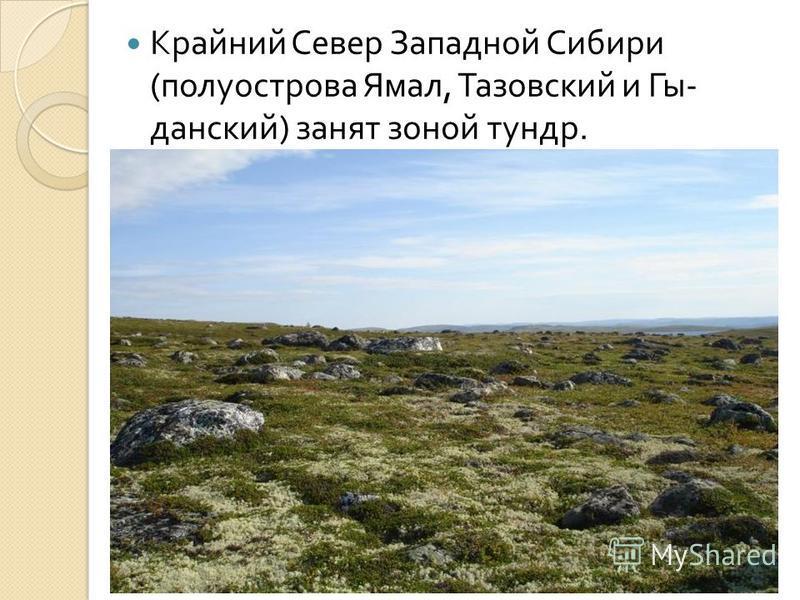Крайний Север Западной Сибири ( полуострова Ямал, Тазовский и Гы - данский ) занят зоной тундр.